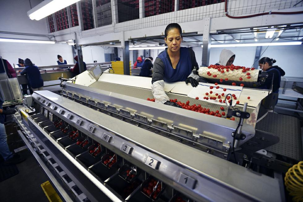 A Fair Labor Market for Food-Chain Workers - The American Prospect
