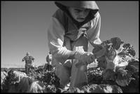 Bacon-Farmworkers-1.jpg