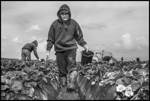 Bacon-Farmworkers-2.jpg