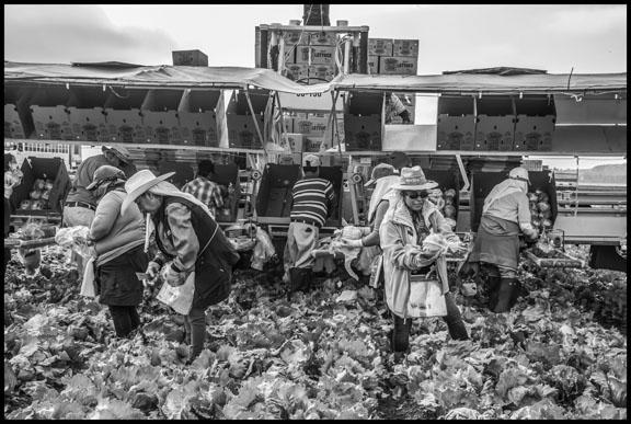 Bacon-Farmworkers-3.jpg