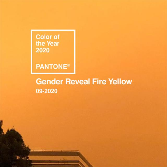 gender reveal fire yellow.jpg