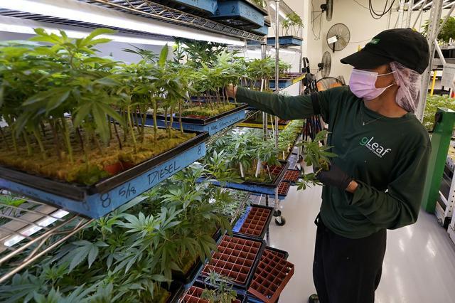 Gurley-Cannabis 071921.jpg